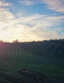 V – for vineyards