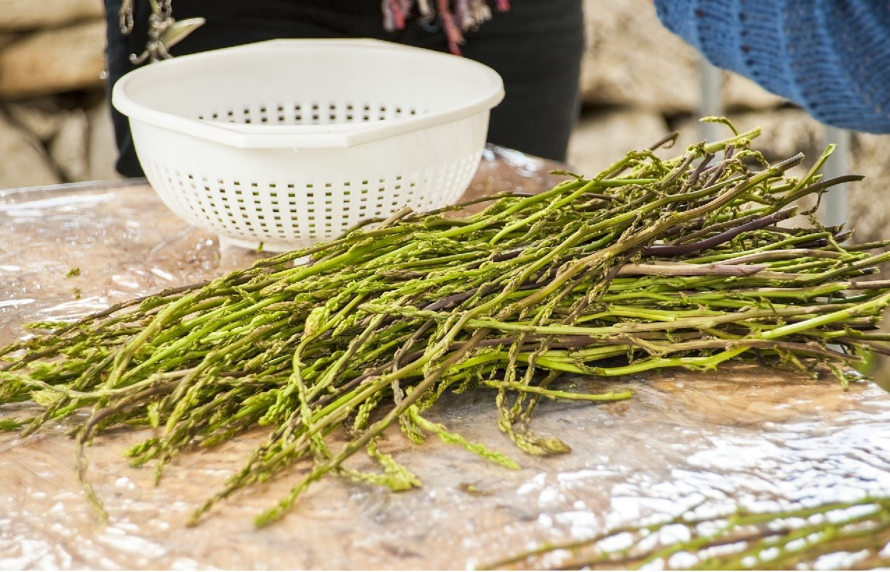 However, Don't Get Tricked By The Name: Wild Asparagus Sprouts Are Nothing  Like Their Cultivated Peers, Themon Asparagus You Can Easily Find At  The