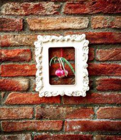 La Cipolla di Certaldo: the Sweet Red Onion of Certaldo