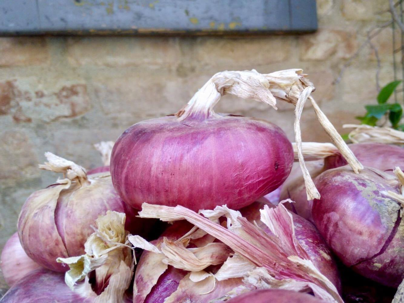 red-onion-certaldo