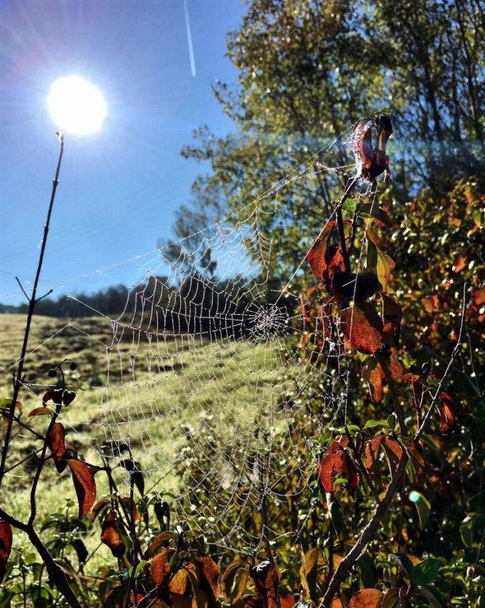 autumn-sun-woods-truffles
