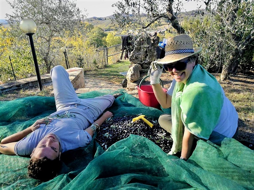 tuscan-olive-harvest-family-fun